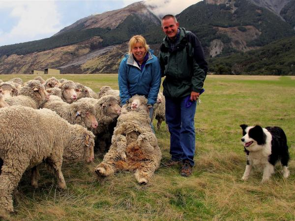 get 'hands on' on a real working sheep