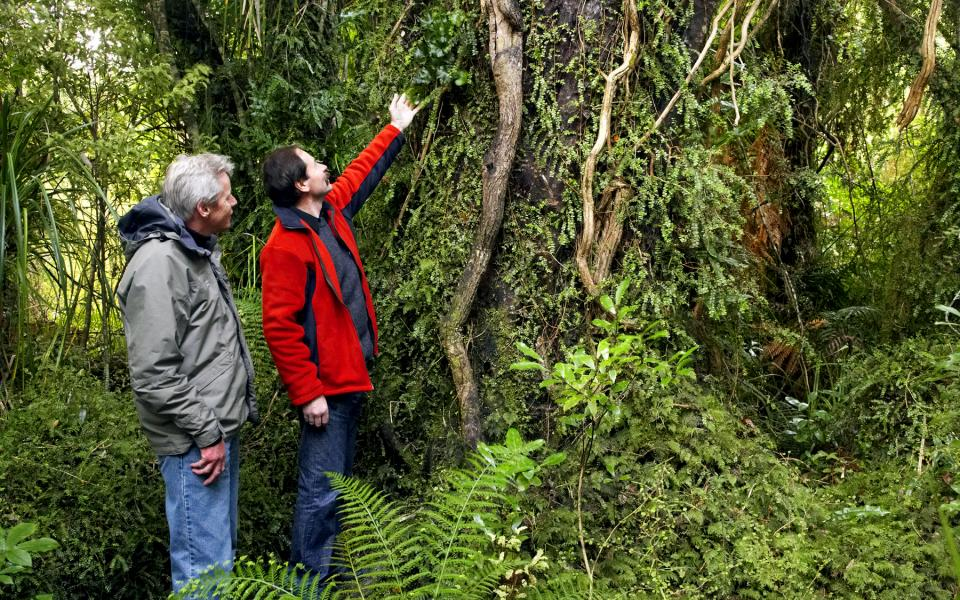 Take an exotic and fascinating guided rainforest discovery walk during your Wilderness Lodge, NZ, holiday.