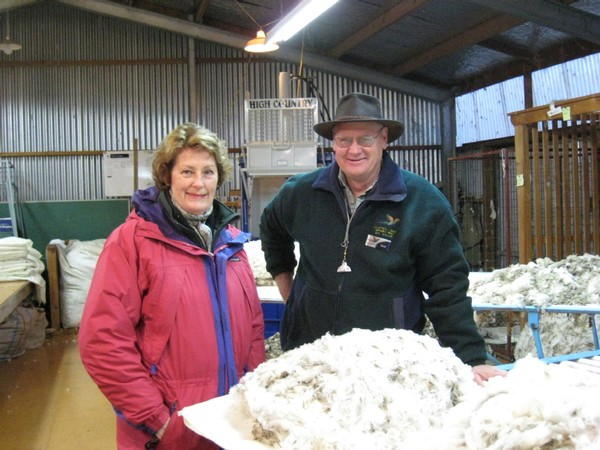 learn about merino wool from a sheep farmer guide