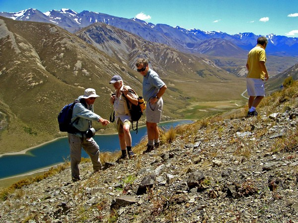 discover Southern Alps plants and animals